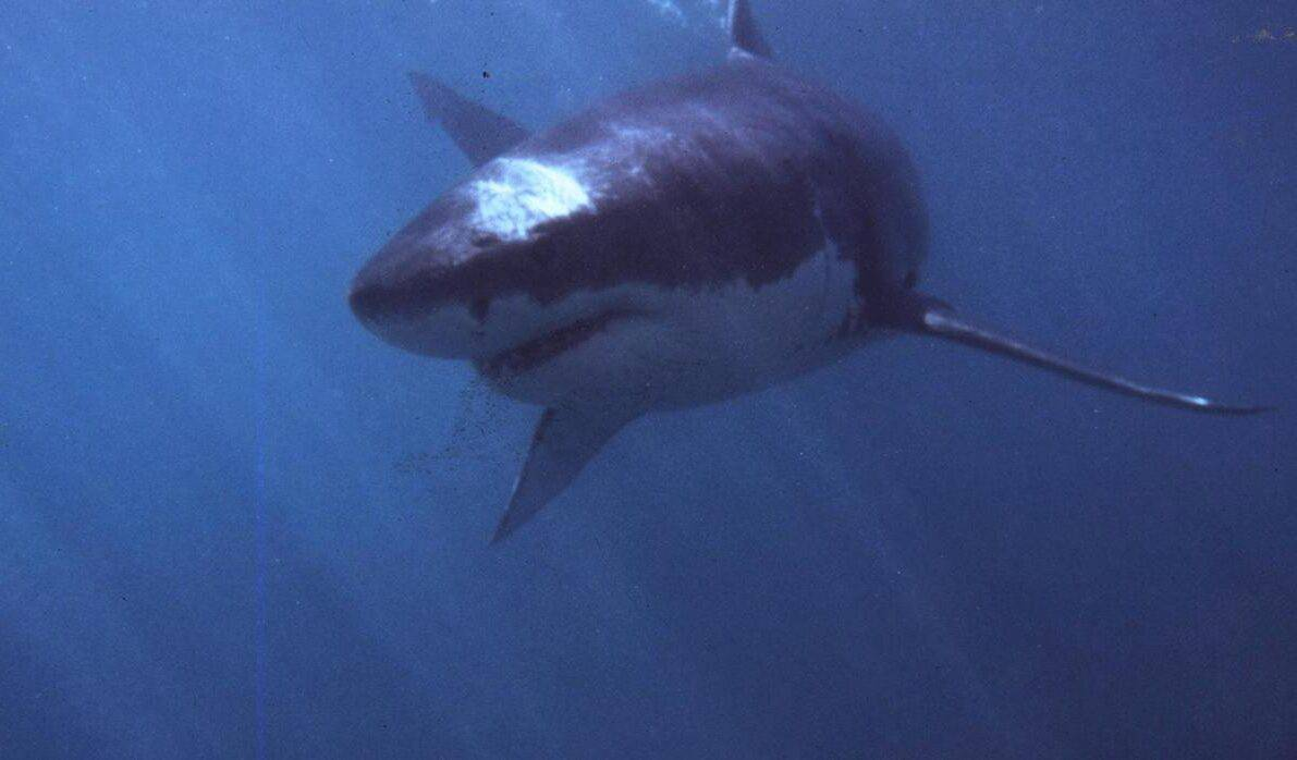 Woman dies after apparent shark attack off the coast of Maine, something that happens very rarely in that state