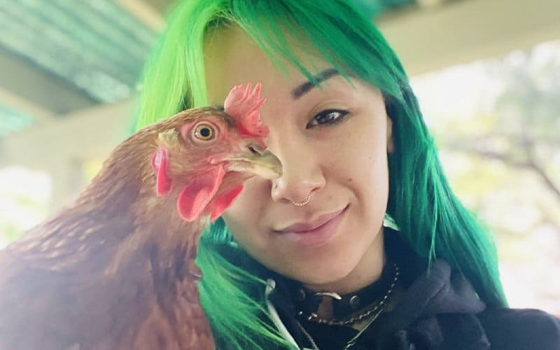 Shotzi Blackheart's Chicken Dies